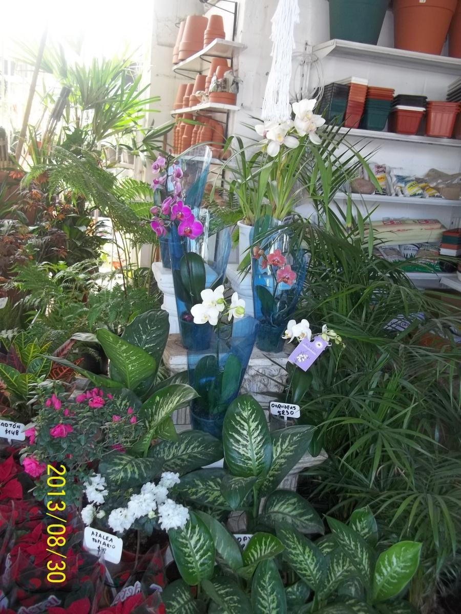 Vivero el jardinero rosario av eva per n 5928 ex c rdoba for Viveros en rosario